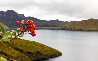 Cancillería logra la designación de Ecuador como miembro de la Junta del Fondo Verde para el clima